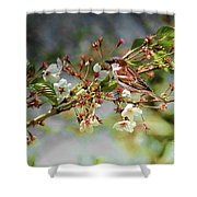 Blossoms And Sparrow Shower Curtain