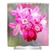 Blossoms Of Spring - April 2014 Shower Curtain