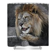 Blow You A Kiss Shower Curtain