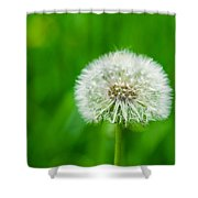 Blowball Of Dandelion - Featured 3 Shower Curtain