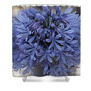 Blue Agapanthus Shower Curtain