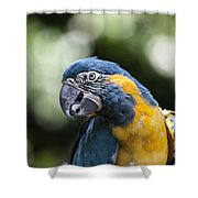Blue And Gold Macaw V5 Shower Curtain