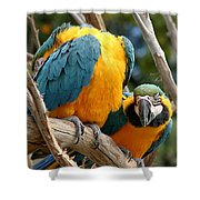 Blue And Gold Macaws Shower Curtain