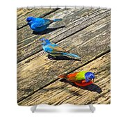 Blue And Indigo Buntings - Three Little Buntings Shower Curtain