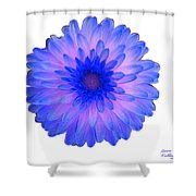 Blue And Pink Dahlia Shower Curtain