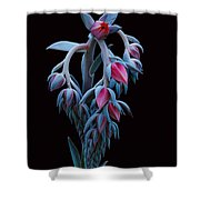 Blue And Pink Succulent Shower Curtain