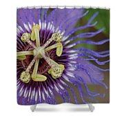 Blue And Purple Detail Shower Curtain