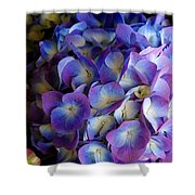 Blue And Purple Hydrangeas Shower Curtain
