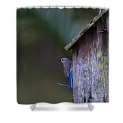 Blue And Rose Beige Plumage Shower Curtain