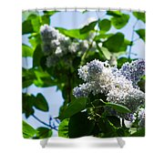 Blue And White Lilacs Shower Curtain