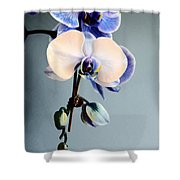 Blue And White Orchids Shower Curtain