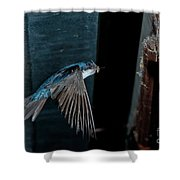 Blue And White Swallow Shower Curtain