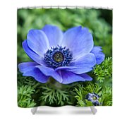 Blue Anemone. Flowers Of Holland Shower Curtain