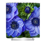 Blue Anemones. Flowers Of Holland Shower Curtain