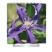 Blue Angel Clematis Close   # Shower Curtain