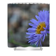 Blue Aster Shower Curtain