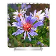 Blue Asters 3 Shower Curtain