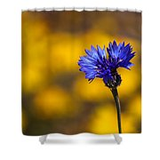 Blue Bachelor Button On Gold Shower Curtain