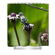 Blue Bee 2 Shower Curtain