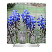 Blue Bells 1 Shower Curtain