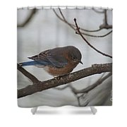 Blue Bird 201301 Shower Curtain