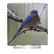 Blue Bird Of Happiness Shower Curtain