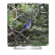 Blue Bird Perched Shower Curtain