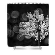 Blue Blooms B/w Shower Curtain