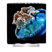 Blue Blubber Jelly - 2 Shower Curtain