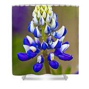 Blue Bonnets Lupinus Shower Curtain