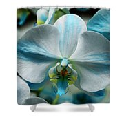 Blue Bow Orchid Shower Curtain