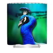 Blue Boy 2 Shower Curtain