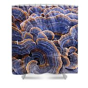 Blue Bracket Macro Shower Curtain by Joshua Bales