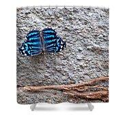 Blue Butterfly Myscelia Ethusa Art Prints Shower Curtain