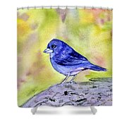 Blue Chaffinch Shower Curtain