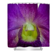 Blue Charm X Aridang Blue Orchid - 2 Shower Curtain