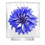 Blue Cornflower Flower Shower Curtain