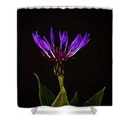 Blue Cornflower Shower Curtain