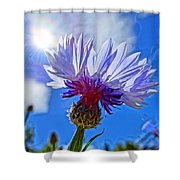Blue Cornflower With Blue Sky Shower Curtain
