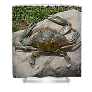 Blue Crab On The Rock Shower Curtain