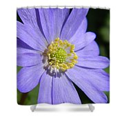 Blue Daisy Up Close Shower Curtain