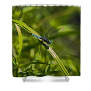 Blue Damsel Dragon Fly Shower Curtain