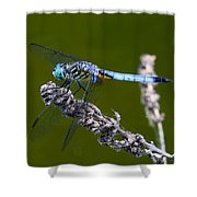 Blue Darter Shower Curtain