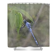 Blue Dasher Dragonfly Shower Curtain
