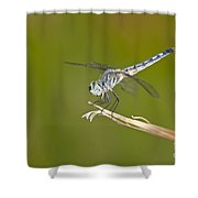 Blue Dasher On The Edge Shower Curtain