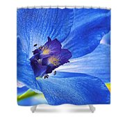 Blue Delphinium Shower Curtain