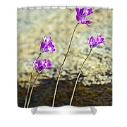 Blue Dicks Sway In A Breeze By Lower Palm Canyon Trail In Indian Canyons Near Palm Springs-california Shower Curtain