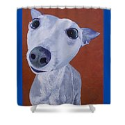 Blue Dog Shower Curtain