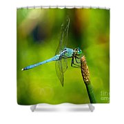 Blue Dragonfly 2 Shower Curtain