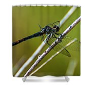 Blue Dragonfly 3 Shower Curtain